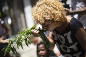 Can planting trees in Rio De Janeiro make it cooler?